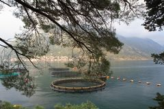 Fish farm through tree leaves in the Bay of Kotor. Royalty Free Stock Images