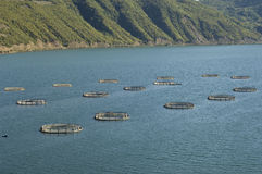 Fish farm. Turkey-Samsun Royalty Free Stock Images