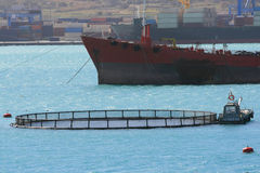 Fish farming. Fish farm ring with trawler nearby Stock Photos