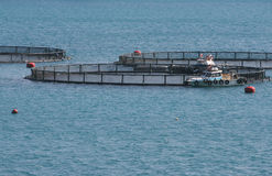 Fish farming. Industry - nets and trawlers Stock Photography