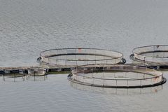 Fish farming Royalty Free Stock Photo