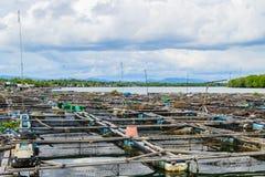 Fish farming Royalty Free Stock Photography