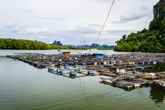 Fish farming Stock Image