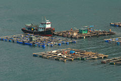 Fish farming. Ponds in Hong Kong Stock Images