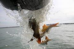 Fish farming Stock Images