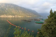 Fish farming in the Bay of Kotor. Royalty Free Stock Images