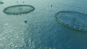 Fish Farming Cage systems. Technology of the global aquaculture industry stock video footage