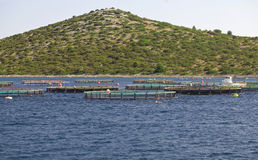 Fish Farming Cages. Fish Farming in Net Cages Stock Images
