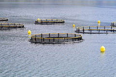 Fish farming nets. Fish farming cages and nets in Adriatic sea royalty free stock images