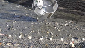 Fish farming stock footage