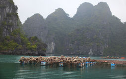 Fish farming and clams in Halong bay, Vietnam Royalty Free Stock Photo
