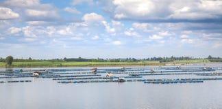 Fish farming at the dam Stock Photo