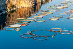 Fish farming in Greece Stock Photography