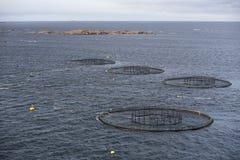 Fish Farming Royalty Free Stock Image