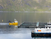Fish farming Stock Image