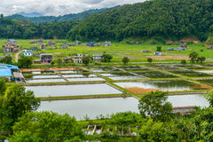 Fish farming in Nepal Royalty Free Stock Image