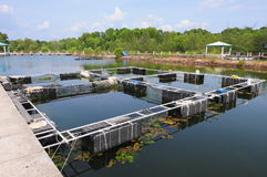 Fish farming net Stock Images