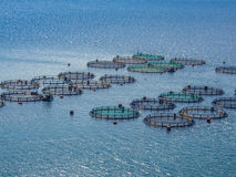 Fish farming. Off the coast of Greece Stock Images