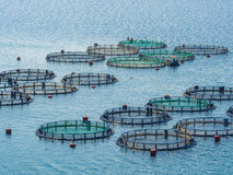Fish farming. Off the coast of Greece Royalty Free Stock Image
