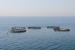 Fish Farms Royalty Free Stock Photo