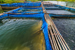 Fish farms with blue net. And bamboo pathway stock photography