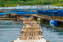 Fish farms with blue net. And bamboo pathway stock photos