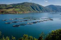 Fish farms Royalty Free Stock Photography