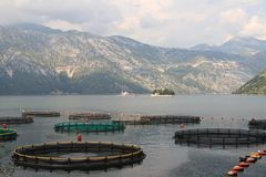 Fish farms in Montenegro, Bay of Kotor. Stock Photos