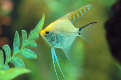 Fish feeding in Aquarium Royalty Free Stock Photography