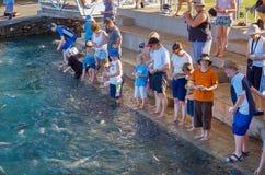 Fish Feeding Darwin Stock Images