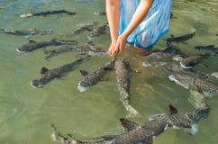 Fish Feeding Royalty Free Stock Images