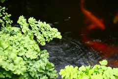 Fish and Fern Royalty Free Stock Photos
