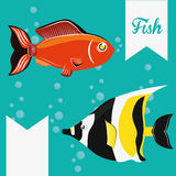 Fish figure design. Sea life concept with fish design, vector illustration 10 eps graphic Stock Images
