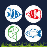 Fish figure design Royalty Free Stock Images