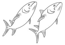 Fish. The figure shows a tuna fish Royalty Free Stock Images