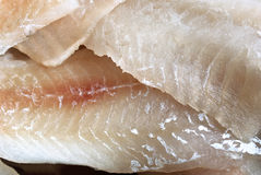Fish fillet texture Stock Photos