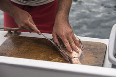 Fish Filleting Stock Image