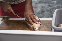 Fish Filleting Stock Photography