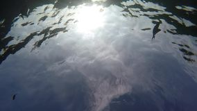 Fish filmed from below stock video footage