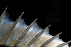 Fish fin Stock Photography