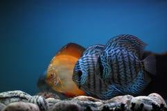 Fish fish and again fish Royalty Free Stock Image
