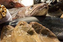 Fish in Fish Market Stock Photos