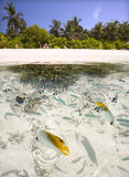 Fish Fish swimming at coral reef. Fish swimming at coral reef, Maldives Royalty Free Stock Images