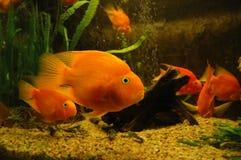 Fish in fish tank Stock Photo