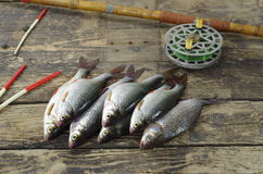 Fish and fishing accessories Stock Images