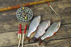 Fish and fishing accessories Stock Photography