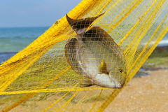 Fish in a fishing nets Royalty Free Stock Photos
