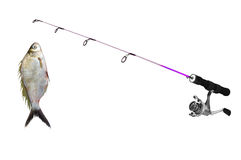 Fish on fishing-rod Royalty Free Stock Image