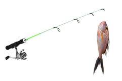 Fish on fishing-rod Royalty Free Stock Photos