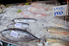 Fish in fishmarket Stock Photography